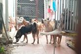 """Nhiều """"không"""" tại Trung tâm động vật nuôi gây ô nhiễm giữa lòng Hà Nội"""