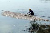 Hà Nội: Nguyên nhân khiến cá chết hàng loạt ở hồ điều hòa Yên Sở