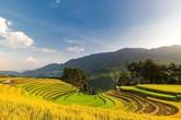 Ngắm mùa vàng rực rỡ vùng cao Mù Cang Chải