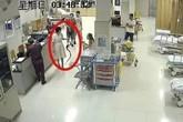 Đi dạo bị rắn cắn, cô gái túm luôn cả con mang theo tới viện cấp cứu