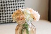 Vừa dễ cắm lại vừa đẹp, hoa cẩm chướng chính là loại hoa không thể thiếu trong ngày Tết