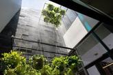 Nhà phố với nội thất hiện đại và không gian giếng trời xanh mát
