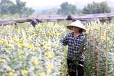 """Vựa hoa lớn nhất Hà Nội """"nín thở"""" chờ Tết"""