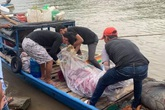 Điều tra vụ thi thể có vết đâm trôi trên sông