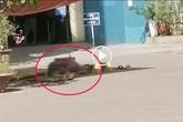 Hà Nội: Người đàn ông tử vong sau khi rơi từ tầng cao chung cư lúc giữa trưa