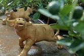 Quất bonsai ngự trên lưng trâu vàng giá 5 triệu đồng đón Tết Tân Sửu