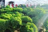 Khu vườn trồng các loại rau và hoa đẹp như mơ của cặp vợ chồng trẻ yêu thiên nhiên