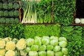 Rau xanh đắt đỏ, ăn gì thay rau?