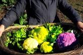 Khu vườn 1000m² đầy ắp rau quả bốn mùa của cô gái thành thị về nông thôn trồng trọt