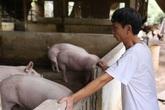 Ngành nông nghiệp chuẩn bị nguồn thực phẩm cung ứng cho người dân trong dịch COVID-19 ra sao?