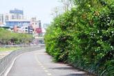 Sự thay đổi đáng kinh ngạc của tuyến đường đi bộ dọc sông Tô Lịch sau một năm đi vào hoạt động
