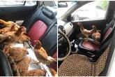 """Cả đàn gà thoải mái ngồi trong ô tô điều hòa mát lạnh khiến người đi đường """"tròn mắt"""" ngạc nhiên"""