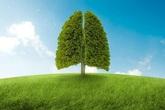 BoniDetox – Bí quyết vàng giải độc phổi do ô nhiễm không khí và hút thuốc lá