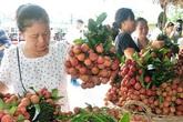 309 thương nhân vào Việt Nam mua vải thiều có tạo gánh nặng lên ngành y tế khi COVID-19 chưa kết thúc?