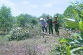 Không được cho chăn thả bò, 3 đối tượng đốn hạ hơn 700 cây keo trong đêm