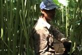 Nông dân kể chuyện: Hai tháng dầm mình dưới bùn, đút túi tiền tỷ