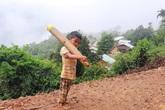 Cậu bé vác măng rừng đi ủng hộ chống dịch nhận món quà bất ngờ