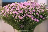 Thâm cung bí sử (219 - 10): Một bông hoa thạch thảo