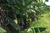 Kẻ hiếp dâm cháu bé 12 tuổi trong vườn chuối: Bỏ vợ, sống một mình