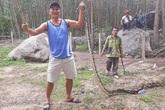 Trăn dài 5 m nuốt chửng con dê 10 kg