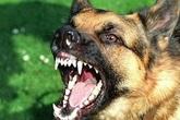 Trêu chó, bé 3 tuổi bị cắn rách mặt