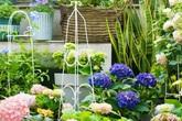 Khu vườn 20m² rộn ràng hoa và nắng trên sân thượng của cô gái 9x