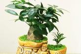 6 loại cây phong thủy đặt bàn thờ hút tài lộc vào như nước trong năm mới