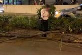 Diễn biến gây bất ngờ vụ tài xế nghi đột quỵ lái xe sang Porsche đâm hàng loạt cây xanh
