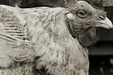 """Chùm ảnh những con vật được """"cho phép sống đến già"""" gây ám ảnh lạ kỳ"""