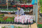 Đồng Tháp: Làng hoa Sa Đéc tất bật mùa hoa Tết