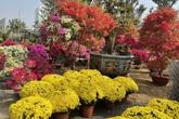 Những loài hoa Tết được người Sài Gòn chuộng mua để mang lại may mắn, tài lộc