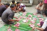 Đặc sắc nét đụng lợn trong ngày Tết ở Tuyên Quang