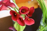 3 mẫu hoa rum dễ cắm cho ngày 20/10