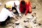 Phát lộ tàu đắm chứa cổ vật hơn 500 năm tuổi