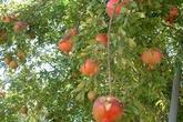 Giải mã bí mật loại trái cây có công dụng sánh ngang…Viagra