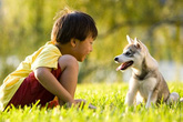 Tổn thương não vì nhiễm ký sinh trùng từ thú nuôi