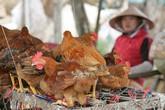 Nguy cơ cúm A/H7N9 vào Việt Nam rất lớn