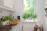 5 loại cây gia vị cho phong thủy nhà bếp