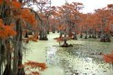 Cận cảnh khu rừng đẹp, độc đáo nhất thế giới