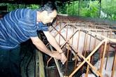 Nông dân nuôi lợn không dám ăn sản phẩm mình làm ra