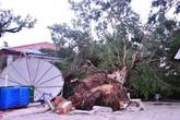 Bão Haiyan không gây thiệt hại về người ở Hải Phòng, Quảng Ninh
