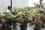 Đại gia chi gần 10 tỷ đồng mua cây cảnh đặt trên sân thượng ngắm mỗi ngày