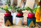 Củ cải đỏ khổng lồ bất ngờ tăng giá gấp đôi trên chợ mạng vì chị em nô nức order trang trí nhà ngày Tết