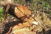 Hai cán bộ quản lý rừng bị bắt