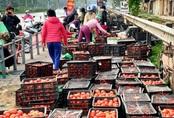 """40.000 đồng/10kg cà chua """"giải cứu"""", mách chị em cách bảo quản cà chua được lâu và chế biến được nhiều món ăn hấp dẫn"""