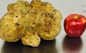 Cây nấm cục giá 1,3 tỷ đồng