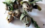 Giật mình loài hoa có hình hộp sọ người chết