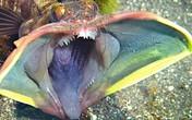 7 loài động vật có hình thù đáng sợ, nguy hiểm nhất thế giới