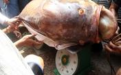 Người Sài Gòn bắt cá hô khổng lồ bán gần 200 triệu đồng
