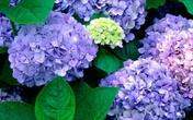 32 loại hoa quả đẹp nhưng có chứa chất độc